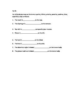 Basic Anatomy Quiz or Group Activity