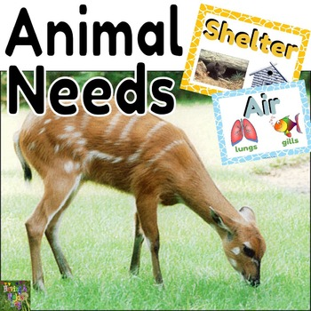 Basic Animal Needs Mini Posters and Worksheets
