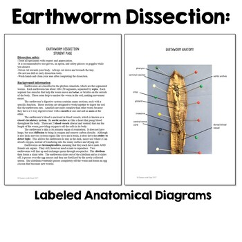 Biology/Anatomy Dissection Bundle: Pig, Frog, Crayfish, Earthworm
