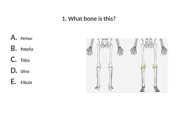 Basic Bones & Muscles Test
