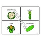 Basic Concepts: Vegetable Vocabulary