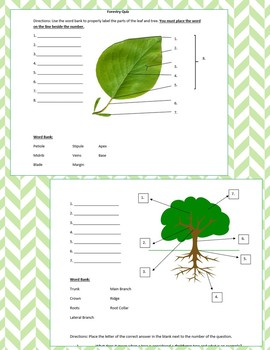 Basic Forestry Quiz