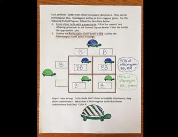 Basic Genetics Doodle Notes- Genotypes and Phenotypes