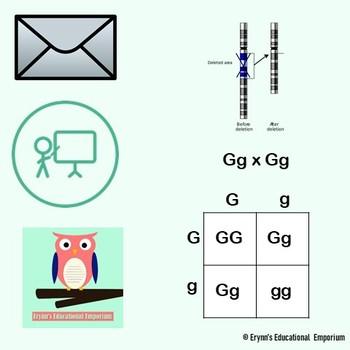 Basic Genetics Vocabulary Practice