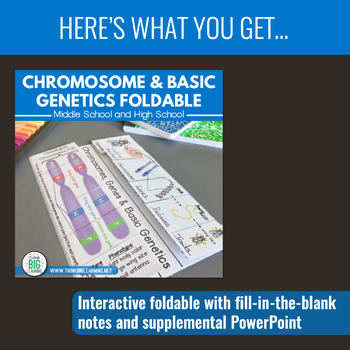 Basic Genetics and Chromosome Bundle