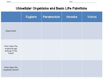 Basic Life Functions of Unicellular Organisms Graphic Organizer