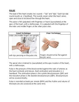 Medical Terminology (Basic): VITAL SIGNS (Pre-med) - Part 5
