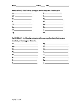 Basic Mendelian Genetics Practice Sheet