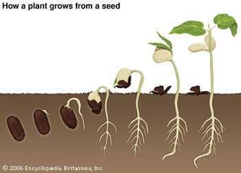 Basic Needs of Seeds