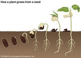 Basic Needs of Seeds