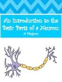 Basic Neuron Diagram