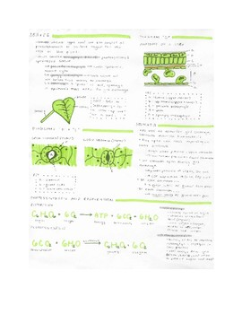 Basic Plant Review Study Guide (2 Pages)
