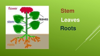 Basic parts of a plant PowerPoint