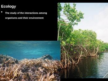 Basics of Ecology PowerPoint