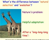 Basics of Evolution, Darwin - Lesson Presentations, Videos, Assignments, Article