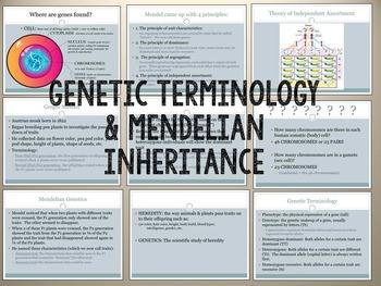 Basics of Genetics: Powerpoint & Interactive Notebook Foldable