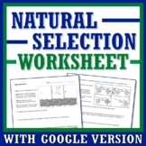 Basics of Natural Selection Worksheet  (evolution, middle