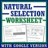Basics of Natural Selection Worksheet  (evolution, middle school) NGSS MS-LS4-6