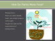 Basics of Plants PowerPoint