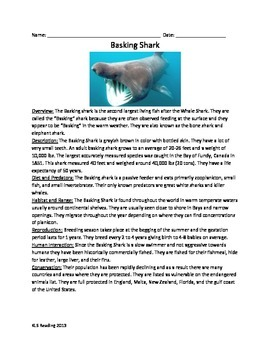 Basking Shark - Review Article Facts information questions vocab word search