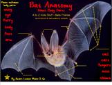 Bat Anatomy: Label Body Parts - PDF