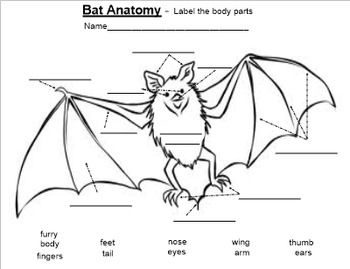 wiring a bat diagram bat anatomy: label body parts - pdf by smart lesson plans ... label bat diagram