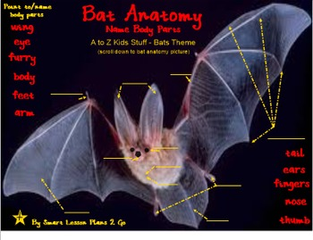 Bat Anatomy: Label Body Parts - PDF