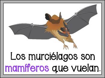 Bat Book in Spanish
