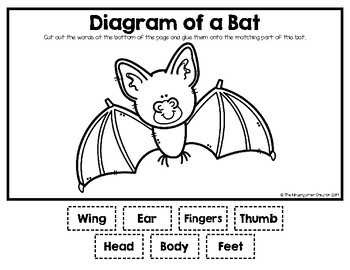 Bat Diagram