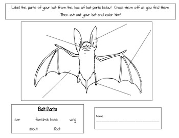 bat diagram to label Parts of a Rabbit Diagram