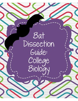 Bat Dissection Package- College Biology