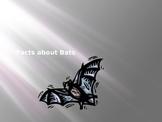 Bat Fact Powerpoint