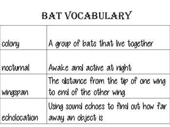 Bat Facts