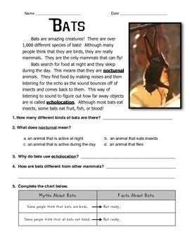 Bat Informational Text