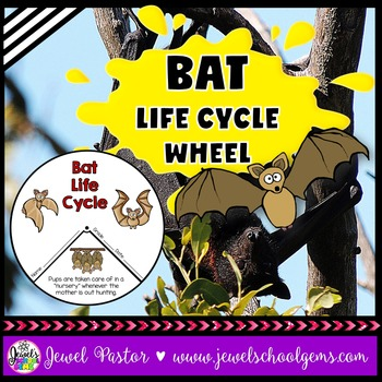 Animal Life Cycle Activities (Bat Life Cycle Craft)