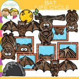 Bat Life Cycle Clip Art