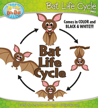 Bat Life Cycle Clip Art Set — Comes In Color and Black & White!