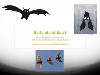 Bat Life Cycle Powerpoint