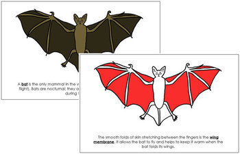 Bat Nomenclature Book (Red)
