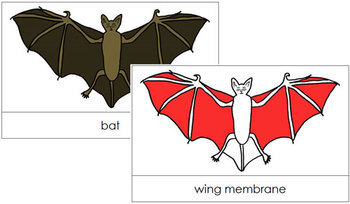 Bat Nomenclature Cards (Red)