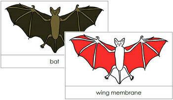 Bat Nomenclature Cards (Red)