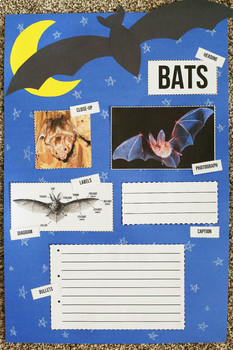 Bat Nonfiction Text Feature Activity