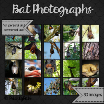 Bat Photo Backgrounds