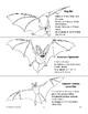 Bat Picture Cards