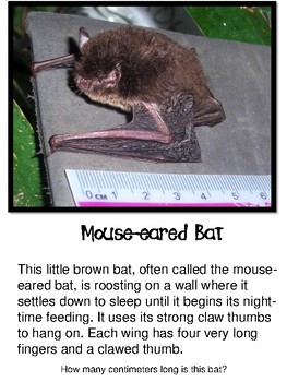 Bat Posters (Slideshow or Posters) with Informational Paragraphs