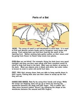 Bat Unit: Gr. 3-5