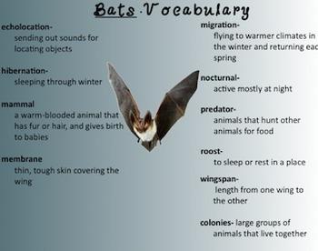 Bat Unit- Smart Notebook Presentation