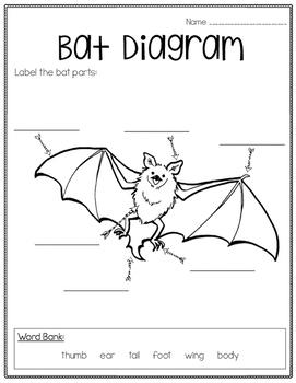 bat informational unit freebie by greatminds123 | tpt label bat diagram label eye diagram quiz