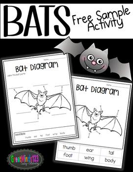 bat informational unit freebie by greatminds123 tpt Colorful Bat Diagrams
