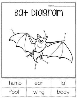 Bat Informational Unit FREEBIE